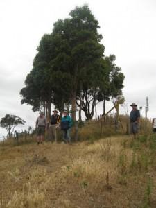 Rotary Trees